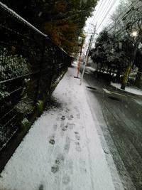 観測史上初の雪