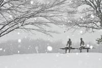 1月30日 雪