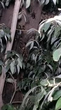 カナブンが大集合していた木に