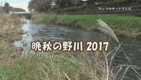 晩秋の野川2017