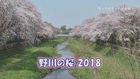 野川の桜2018