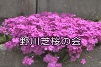 野川芝桜の会