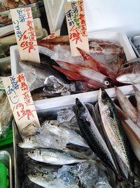 新島沖、定置網漁 朝獲れ島魚が調布の鮮魚店にデビュー