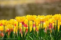 春の花を被写体に楽しく学ぶ、初心者向け写真教室開催のお知らせ 2016/03/16 11:05:35