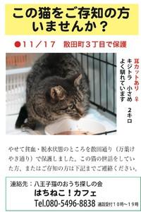 この猫ちゃんを知りませんか?