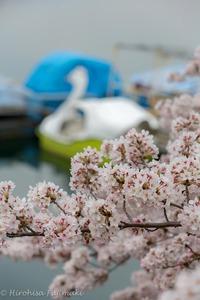桜満開の日。。。 2018/03/24 09:03:24
