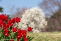 春の花を被写体に。。。 2018/03/25 15:09:01