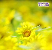 幸せな認知症 2017/08/13 10:00:00