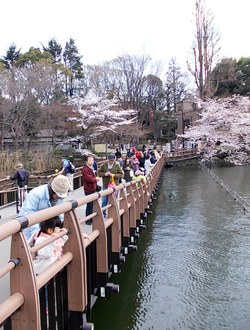 満員の七井橋