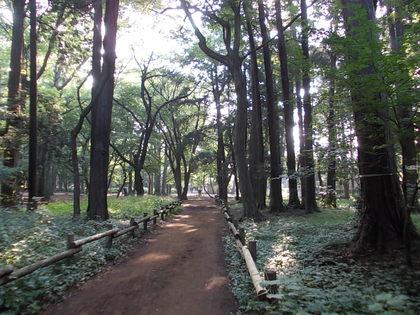巨樹の散歩道