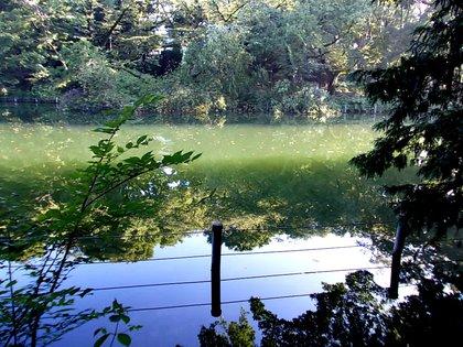 湖面は静か