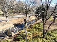 今日の散歩9>井の頭公園ー吉祥寺ー上連雀6km