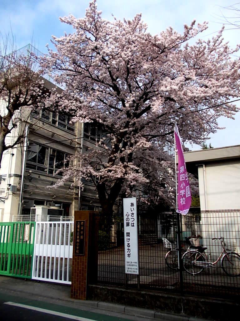 四小の西門の桜