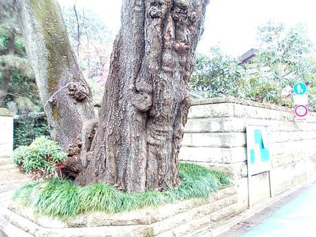 巨樹のある集落