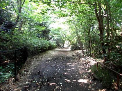 小鳥の森のわき道