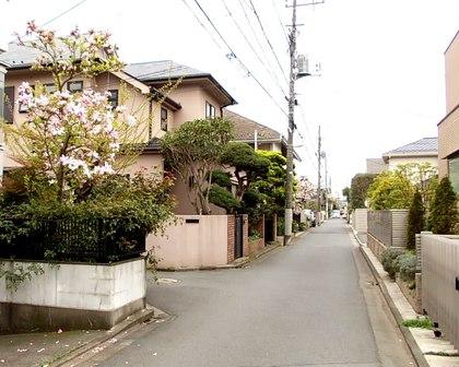 花の木のある住宅街
