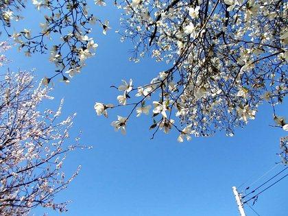 桃の花と競演