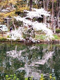池面が描く芸術