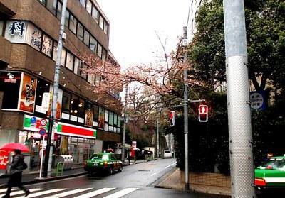 都心・港区神谷町の開花