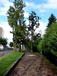 中央通りの自然樹