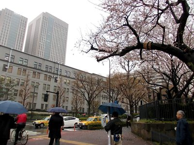 霞ヶ関財務省前の桜