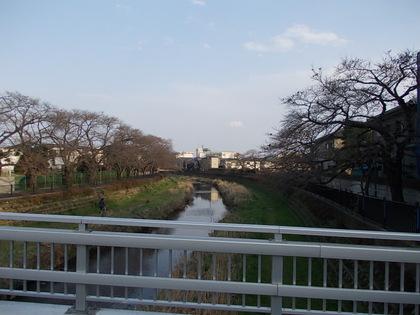 野川の午後