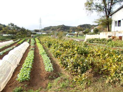 多摩の畑の風景