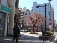 3月の26日、ぶらぶら日記>八王子桜咲き始め♪