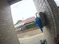 可愛い傘、みつけました。