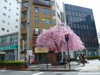 桜リサーチです(^-^)ちょい早かったです。