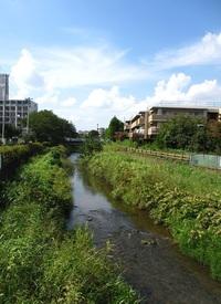 黒目川散策