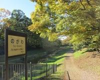 秋の野川さんぽ