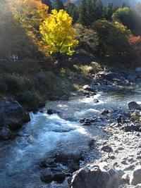 奥多摩渓谷の秋