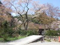 桜の広徳寺はどうなんだろうか