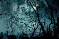 月夜のナイトハイク
