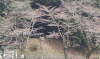 トーク【山岳信仰ってなんなのさ?日本列島の生物多様性が育んだ信仰】