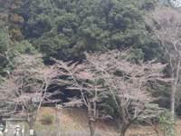 鎮守の森と生物多様性~生きものぐらしの心得~