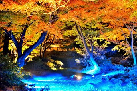 10月1日 行く予定の六義園(夜景)
