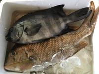 釣り魚入荷‼︎