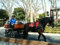 府中の東京競馬場で花見と馬車体験楽しみました♪