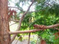 セミいっぱい!子どもと木登り&昆虫採集のコツ