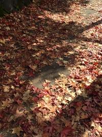 秋が短いな