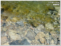 多摩地区で出来る各種体験:マス釣り(秋川国際マス釣場)