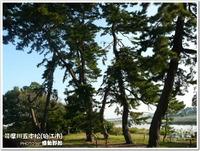 浮世絵に出て来そうな景観!~多摩川五本松(狛江市)~