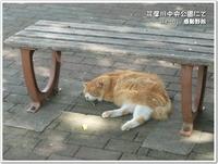 多摩川中央公園で撮った生き物たち(福生市)