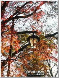 多摩地区紅葉狩り2011(井の頭公園)