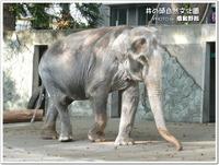 アジアゾウ「はな子」に逢えた♪~井の頭自然文化園~