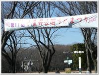 梅、何とか咲いてました♪~小金井公園うめまつり~