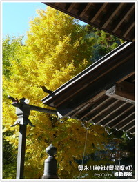 奥氷川神社(奥多摩町)のイチョウ-2012年11月16日-