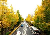 甲州街道いちょう並木と多摩御陵で紅葉散歩を楽しむ 2015/11/20 21:40:00